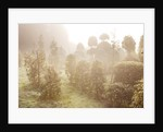 Highfield Hollies, Hampshire - The Nursery In Mist by Clive Nichols