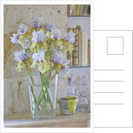 Iris Cayeux, France - Vase Of Still To Be Named Iris In Richard Cayeux's House by Clive Nichols