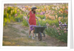 Iris Cayeux, France - Woman In Iris Show Fields by Clive Nichols