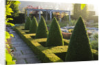 Waterperry Gardens, Oxfordshire: The Hedged In Formal Garden At Dawn With Box And Berberis Hedging And Topiary by Clive Nichols