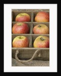 Apples - Malus 'king Of The Pippins' - Rhs London Autumn Harvest Show 2011. Styling By Jacky Hobbs by Clive Nichols