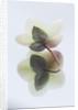 Harveys Garden Plants, Suffolk: by Clive Nichols
