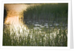 Dudmaston Estate, Shropshire. National Trust. May 2012 - Reeds On The Lake At Sunset by Clive Nichols