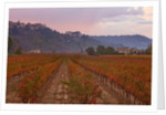 Menerbes, Luberon, France: Vineyards In Autumn Below The Village Of Menerbes by Clive Nichols