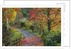 Bodenham Arboretum, Worcestershire: Autumn Colour Beside A Path With Quercus Coccinea, Liquidambar Styraciflua, Betula Pendula And Carpinus Betula Fastigiata by Clive Nichols