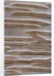 Stone Lane Garden, Devon: Winter - Close Up Of Bark Of Betula Ermanii 'grayswood Hill' - Agm by Clive Nichols