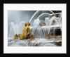 Fountain At Versailles Chateau De Versailles, France by Clive Nichols
