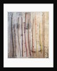 Still life of cornus stems by Clive Nichols