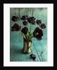 Still life vase arrangement of black tulips by Clive Nichols