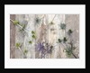 Still life of eryngiums by Clive Nichols