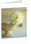 Constance spry vase with dahlia white sensation by Clive Nichols