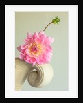 Constance spry vase with dahlia gerrie hoek by Clive Nichols