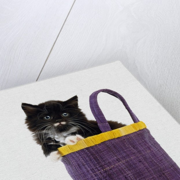 Kitten in a Tote Bag by Corbis