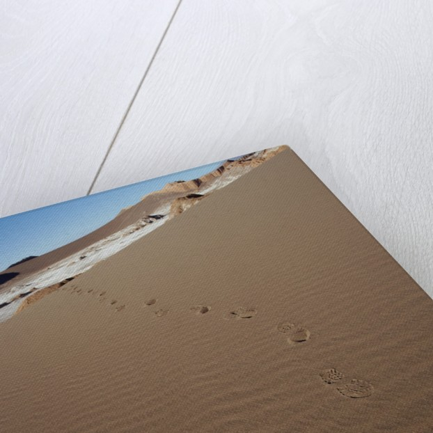 View of footprints leading over a sand dune by Corbis