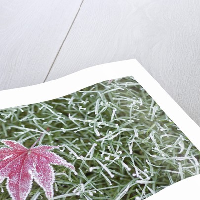 Frost on Leaf and Grass by Corbis