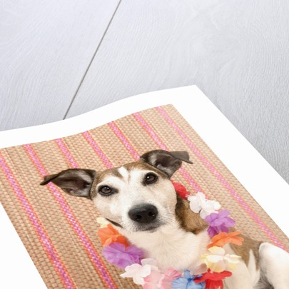 Dog with Lei by Corbis