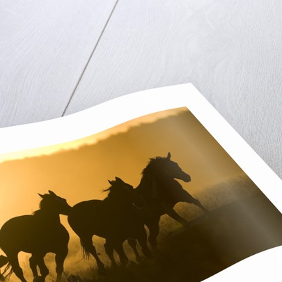 Silhouette of Cowboy Herding Horses by Corbis