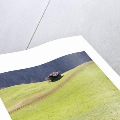 Mountain Cabin by Corbis