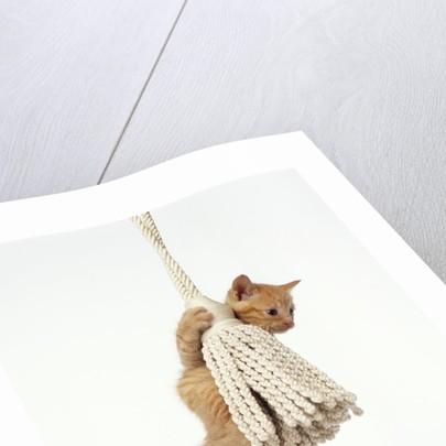 Orange Kitten Hanging from Tassel by Corbis