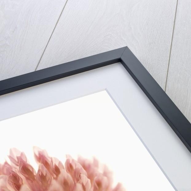 Pink Clover Flower by Corbis