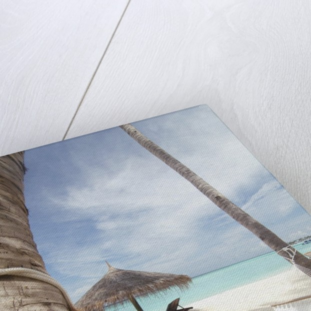 Hammock on the beach by Corbis