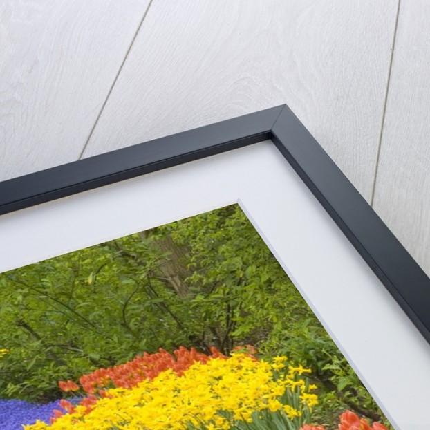 Flowers at Keukenhof Garden by Corbis