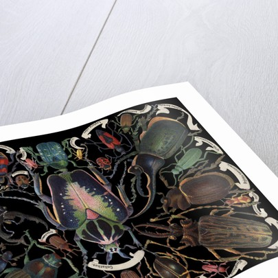 Die-Cut Scrap with Variety of Beetles by Corbis