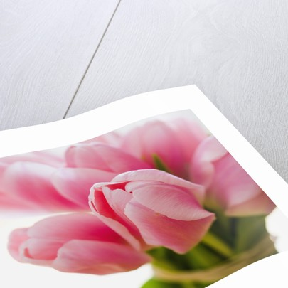 Pink tulips by Corbis