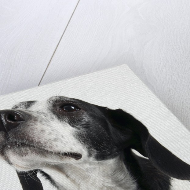 Dog Looking Up by Corbis