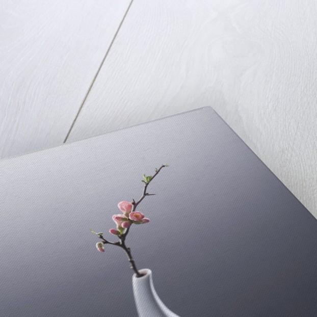 Cherry blossom in vase by Corbis