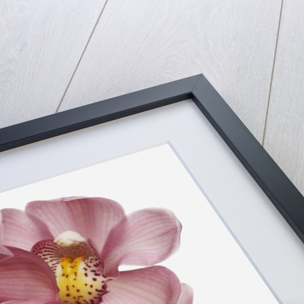 Pink Cattleya orchids by Corbis