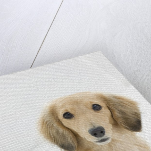 Dog on couch by Corbis