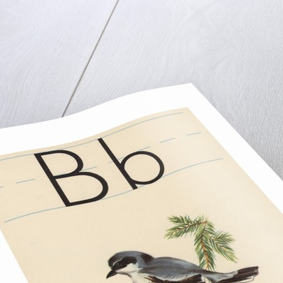 B is for bird by Corbis