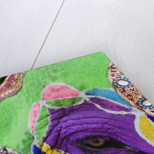 Close-up of a painted elephant, Elephant Festival, Jaipur, Rajasthan, India by Corbis
