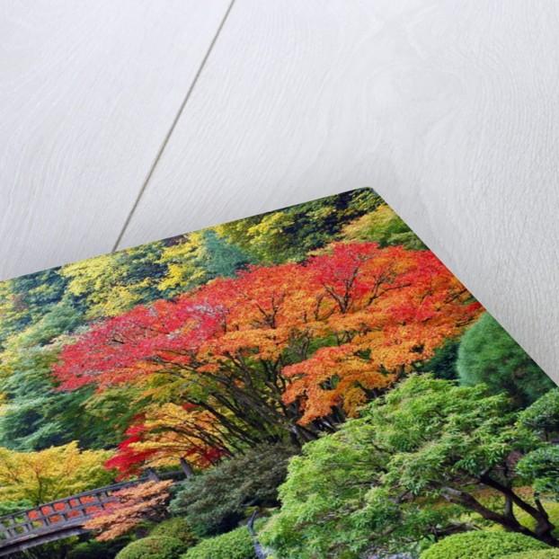 Fall colors at Portland Japanese Gardens, Portland Oregon by Corbis