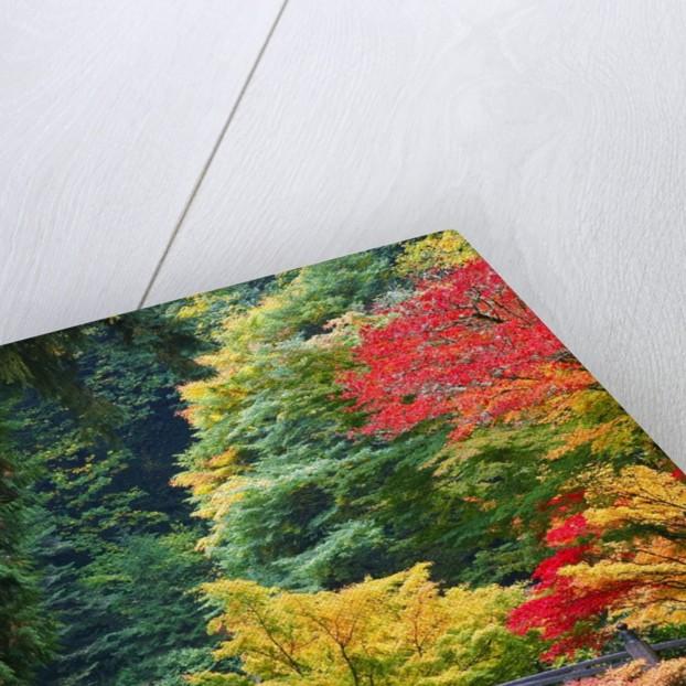 Bridge in Japanese Garden by Corbis
