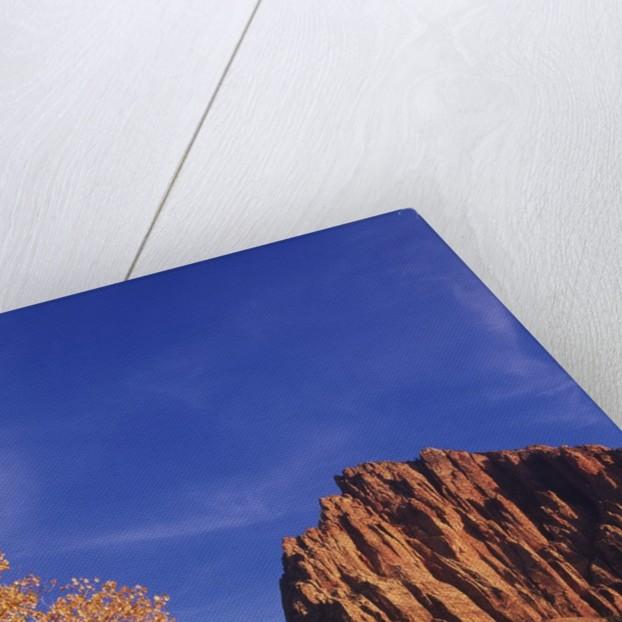 USA, Utah, Zion National Park, Cliffs Along Virgin River by Corbis