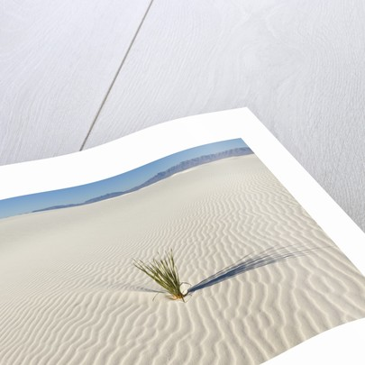 Dune and Yucca plant in White Sands National Monument by Corbis
