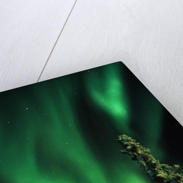 Aurora Borealis or Northern Lights, Yukon. by Corbis