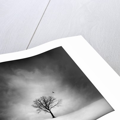 Solitary tree in a winter landscape by Corbis