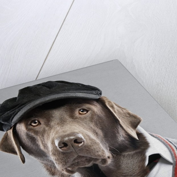 Dog in sweater and cap by Corbis