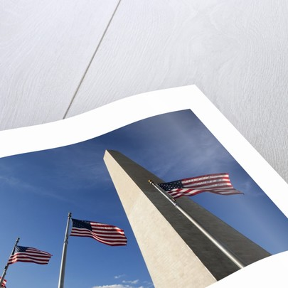 American flags encircling Washington Monument by Corbis