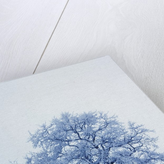 Winter landscape with snow covered oak by Corbis