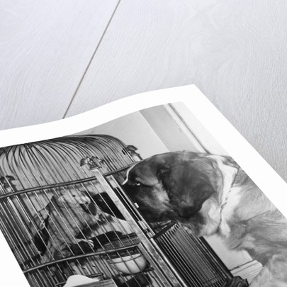 Dog looking at parrot in cage by Corbis
