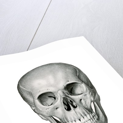 Anterior or Frontal View of Human Skull by Corbis