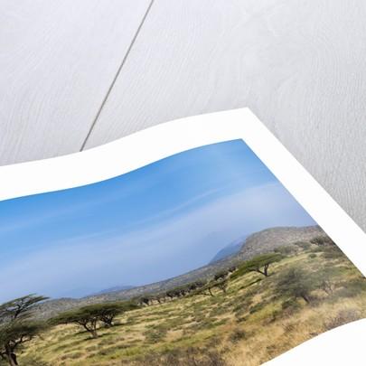 Samburu, Kenya by Corbis