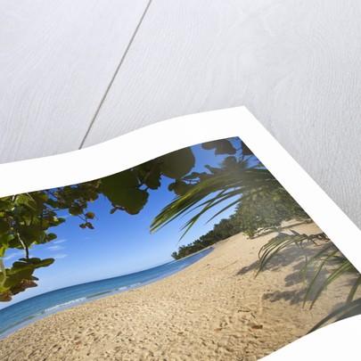 Tropical beach, Las Terrenas, Dominican Republic by Corbis