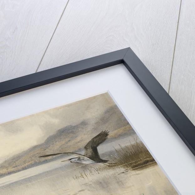 Mergansers on Loch Maree by Archibald Thorburn