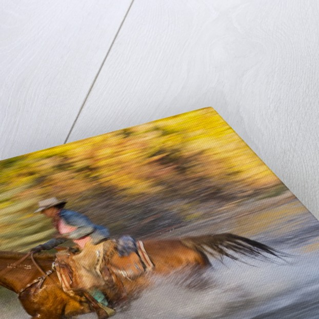 Cowgirl riding through river on a horse by Corbis