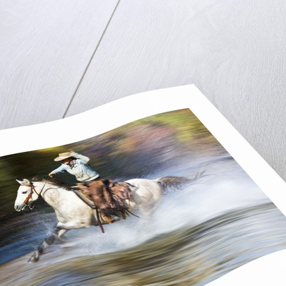 Cowgirl riding through river on horse by Corbis